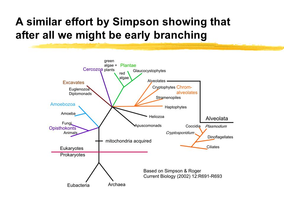 A similar effort by Simpson showing that after all we might be early branching