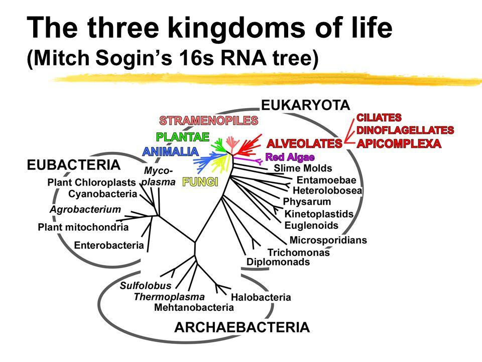The three kingdoms of life (Mitch Sogin's 16s RNA tree)