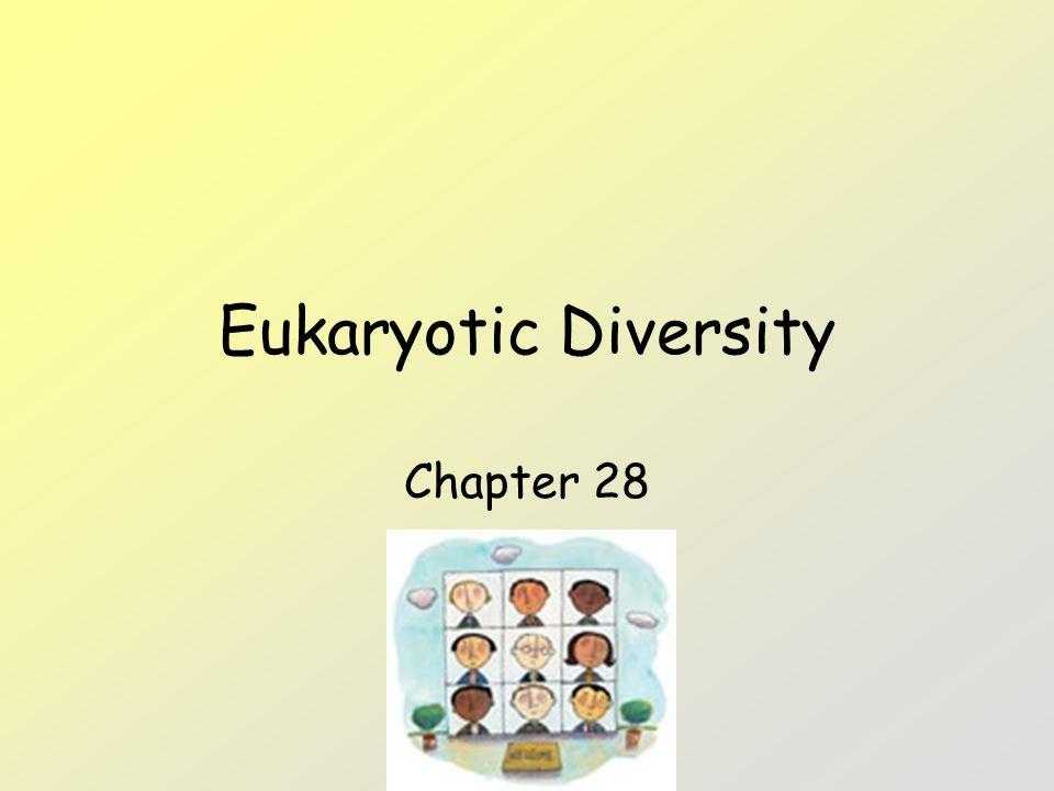 Eukaryotic Diversity Chapter 28