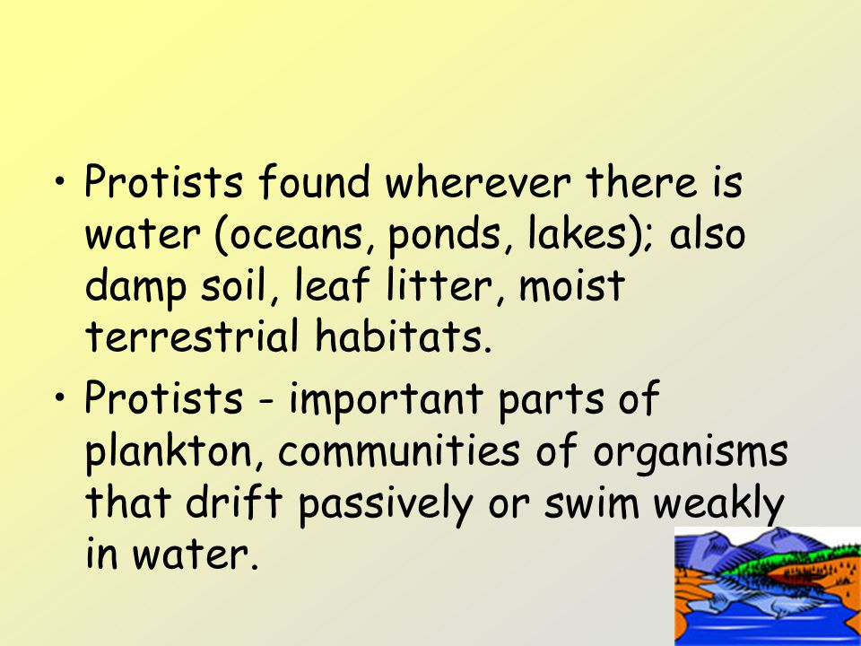Protists found wherever there is water (oceans, ponds, lakes); also damp soil, leaf litter, moist terrestrial habitats. Protists - important parts of