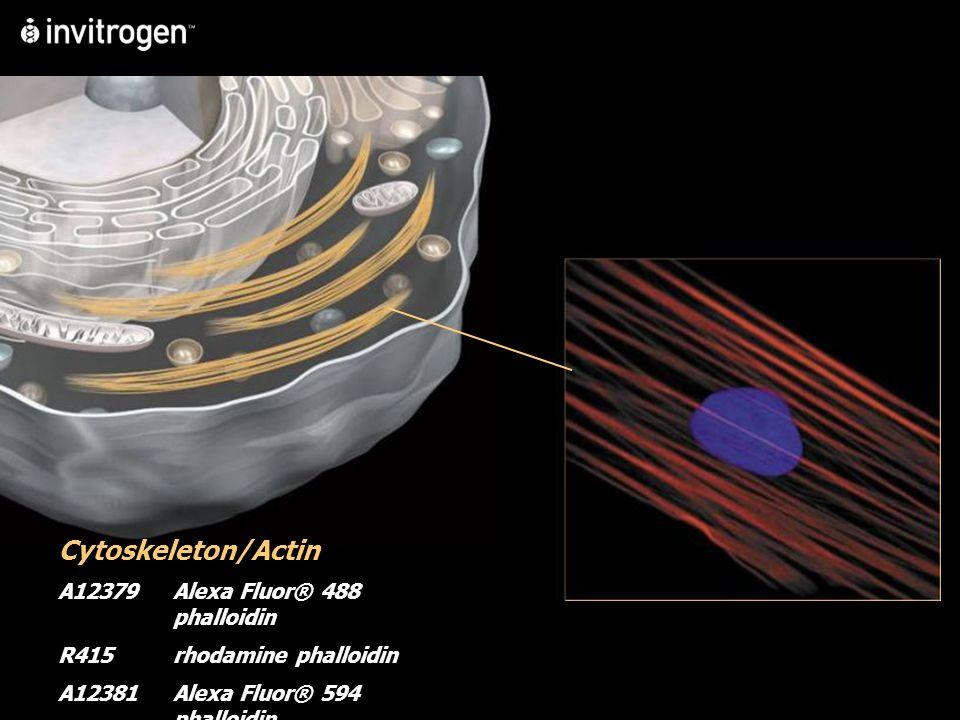 Cytoskeleton/Actin A12379Alexa Fluor® 488 phalloidin R415rhodamine phalloidin A12381Alexa Fluor® 594 phalloidin