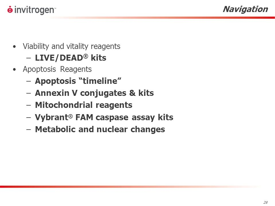 28 Navigation Viability and vitality reagents –LIVE/DEAD ® kits Apoptosis Reagents –Apoptosis timeline –Annexin V conjugates & kits –Mitochondrial reagents –Vybrant ® FAM caspase assay kits –Metabolic and nuclear changes