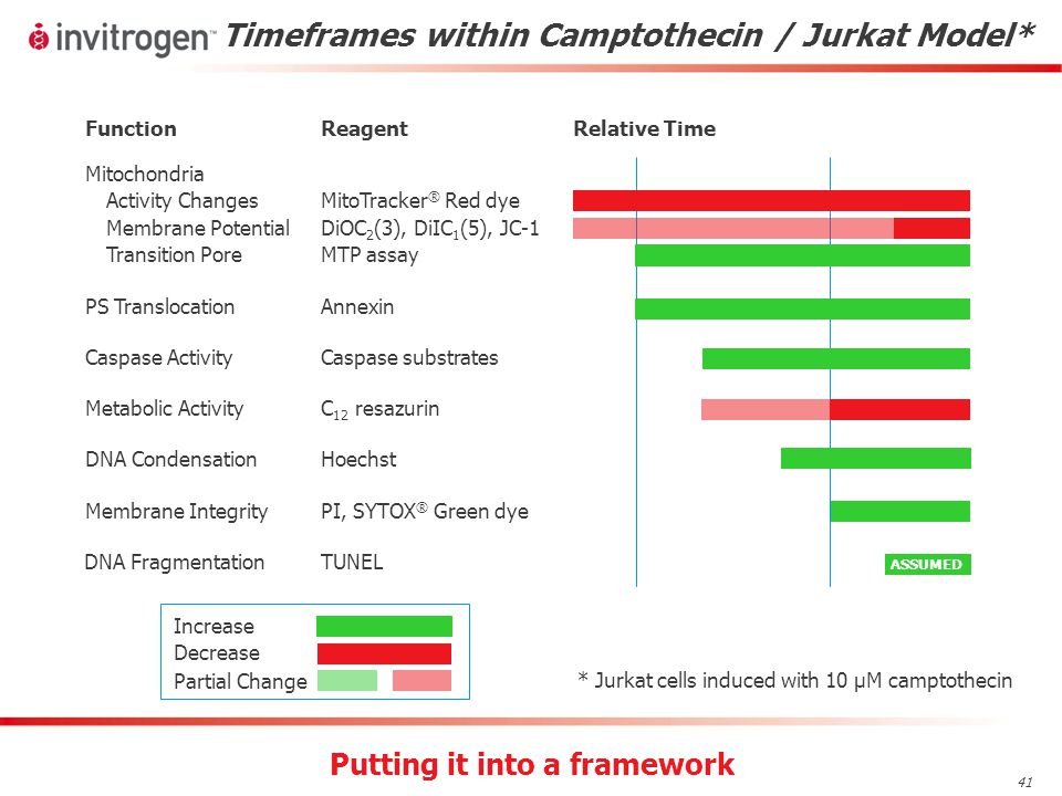 41 Timeframes within Camptothecin / Jurkat Model* FunctionReagentRelative Time PS TranslocationAnnexin Membrane Integrity PI, SYTOX ® Green dye Mitochondria Activity Changes Membrane Potential Transition Pore MitoTracker ® Red dye DiOC 2 (3), DiIC 1 (5), JC-1 MTP assay Caspase ActivityCaspase substrates Increase Decrease Partial Change Metabolic ActivityC 12 resazurin * Jurkat cells induced with 10 µM camptothecin Putting it into a framework DNA CondensationHoechst DNA FragmentationTUNEL ASSUMED