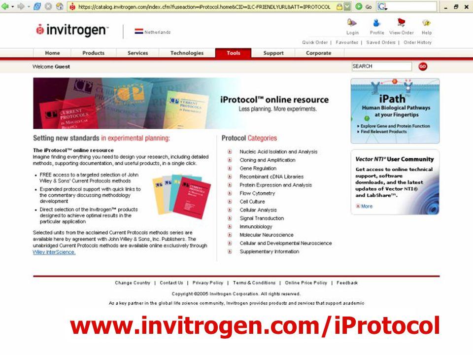 59 www.invitrogen.com/iProtocol