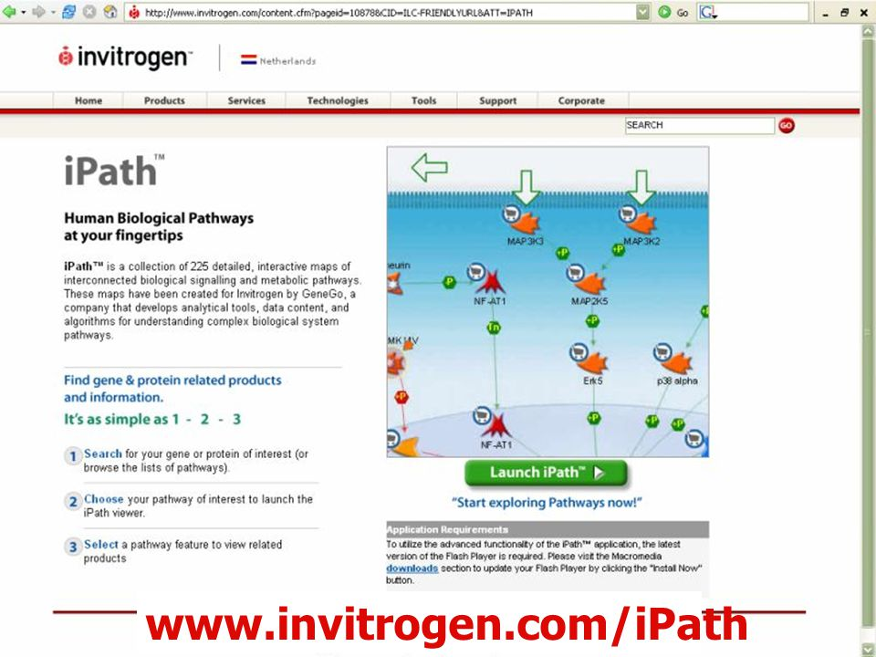60 www.invitrogen.com/iPath