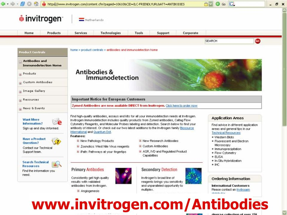 61 www.invitrogen.com/Antibodies