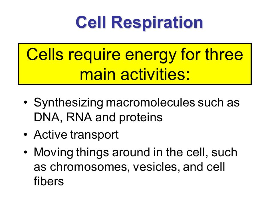 Cell Respiration Synthesizing macromolecules such as DNA, RNA and proteins Active transport Moving things around in the cell, such as chromosomes, vesicles, and cell fibers Cells require energy for three main activities: