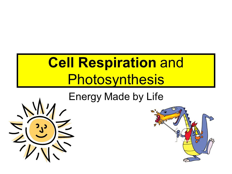 Cell Respiration and Photosynthesis Energy Made by Life