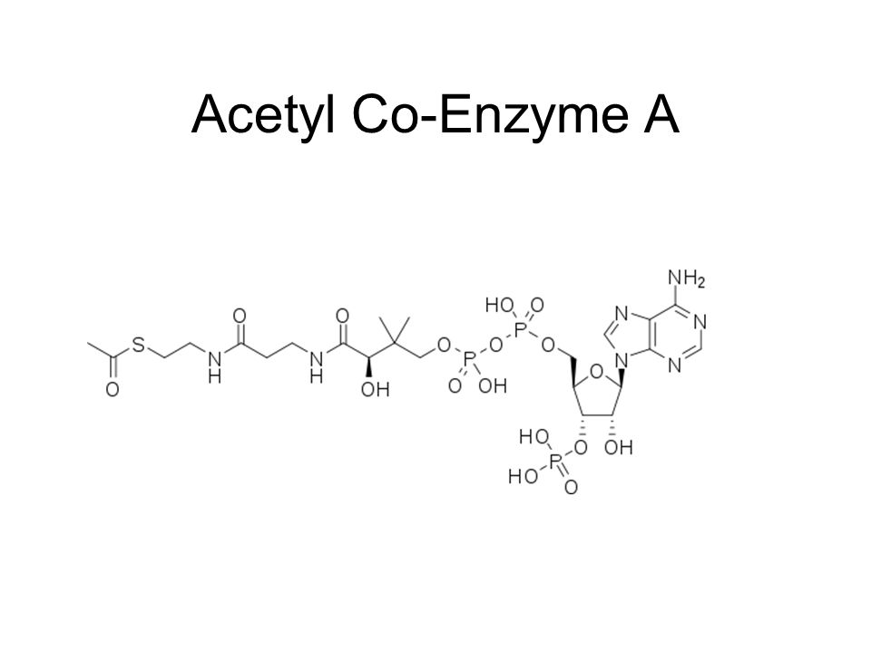 Acetyl Co-Enzyme A