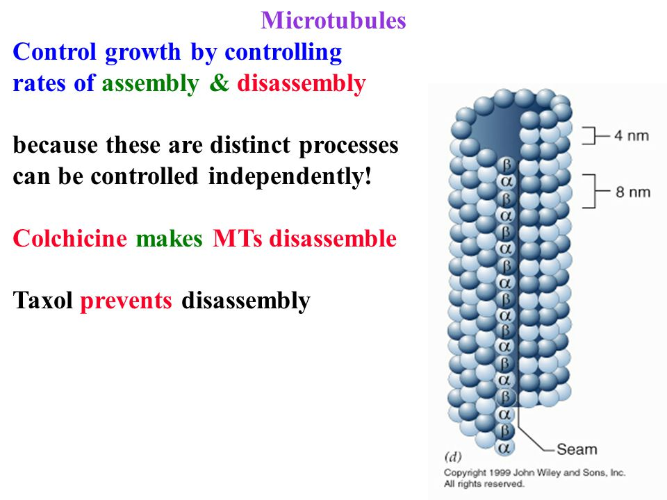 Microtubules Control growth by controlling rates of assembly & disassembly because these are distinct processes can be controlled independently! Colch