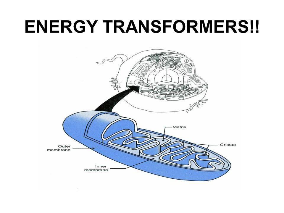 ENERGY TRANSFORMERS!!