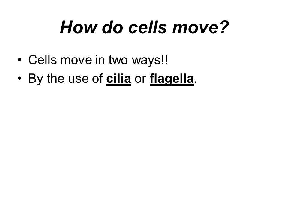 How do cells move Cells move in two ways!! By the use of cilia or flagella.