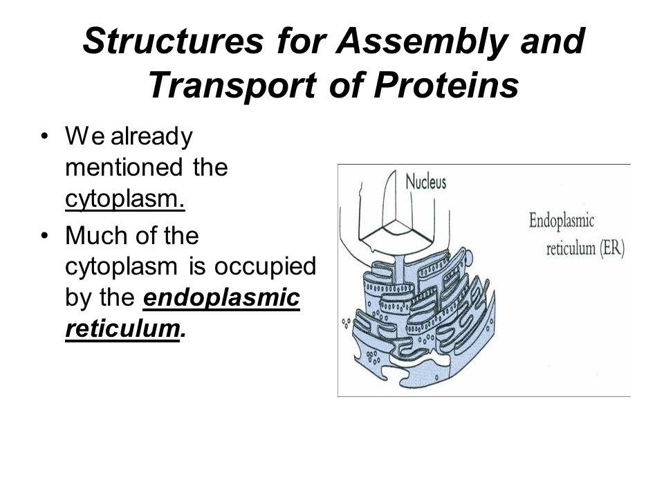 Structures for Assembly and Transport of Proteins We already mentioned the cytoplasm.