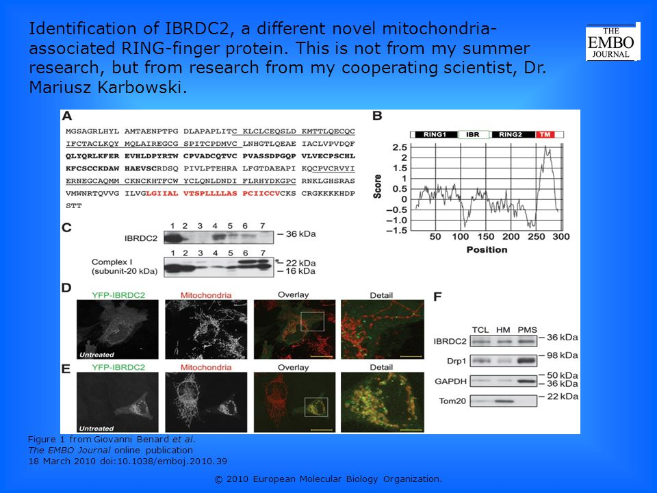 Figure 1 from Giovanni Benard et al. The EMBO Journal online publication 18 March 2010 doi:10.1038/emboj.2010.39 Identification of IBRDC2, a different
