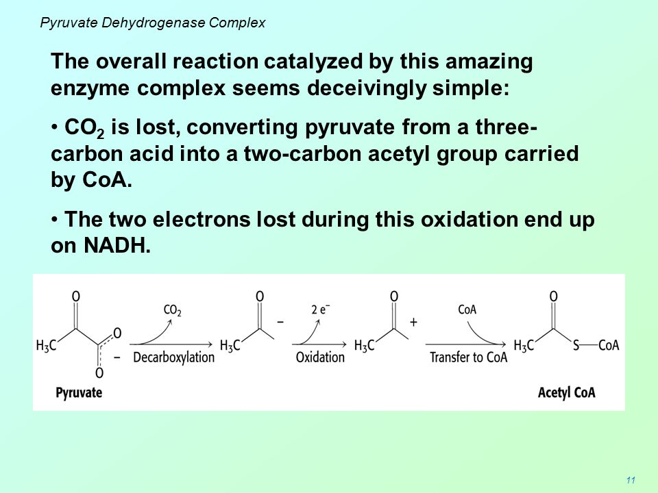 11 Pyruvate Dehydrogenase Complex The overall reaction catalyzed by this amazing enzyme complex seems deceivingly simple: CO 2 is lost, converting pyr