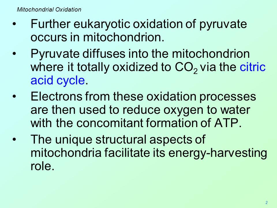 2 Mitochondrial Oxidation Further eukaryotic oxidation of pyruvate occurs in mitochondrion. Pyruvate diffuses into the mitochondrion where it totally