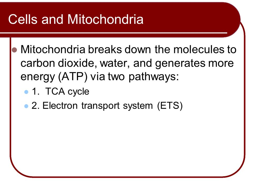 Mitochondria breaks down the molecules to carbon dioxide, water, and generates more energy (ATP) via two pathways: 1. TCA cycle 2. Electron transport