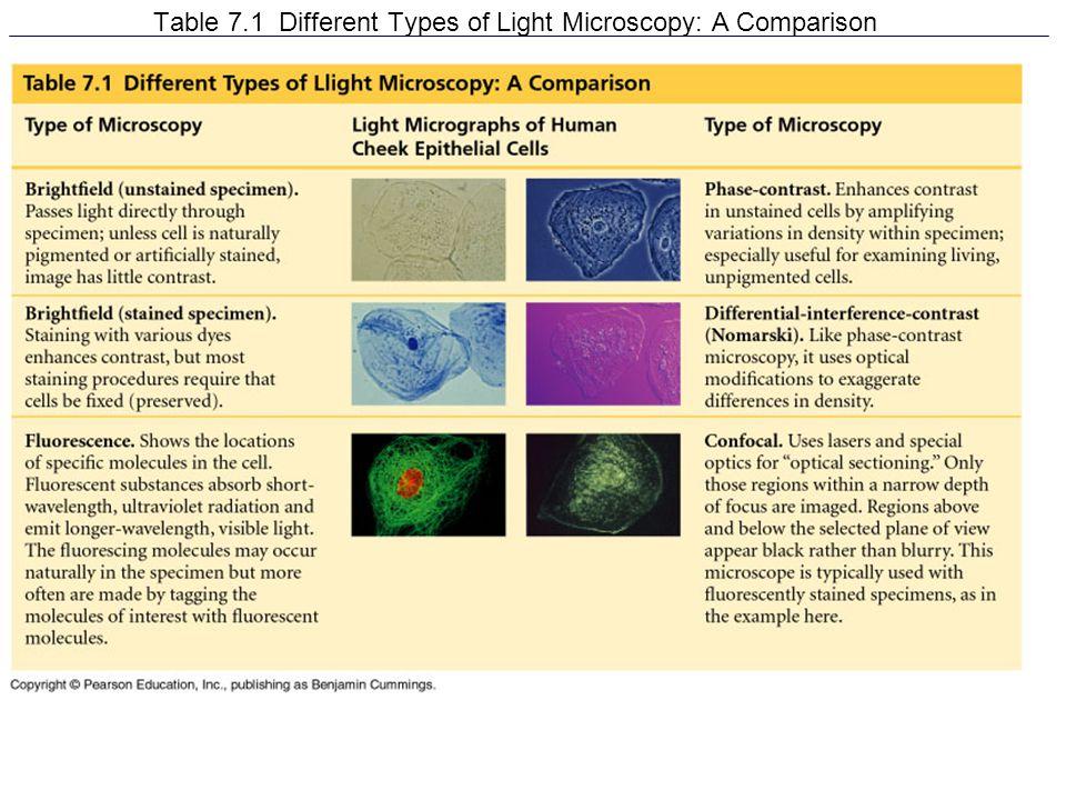 Cilia and Flagella Cell Movement