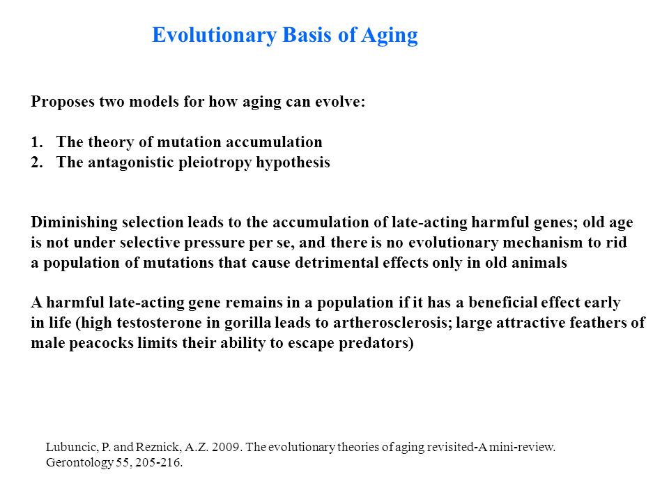 Evolutionary Basis of Aging Proposes two models for how aging can evolve: 1.The theory of mutation accumulation 2.The antagonistic pleiotropy hypothes