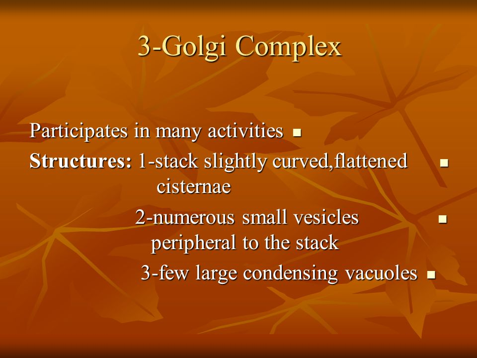 3-Golgi Complex Participates in many activities Participates in many activities Structures: 1-stack slightly curved,flattened cisternae Structures: 1-stack slightly curved,flattened cisternae 2-numerous small vesicles peripheral to the stack 2-numerous small vesicles peripheral to the stack 3-few large condensing vacuoles 3-few large condensing vacuoles