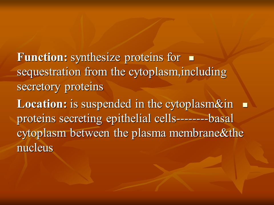 Function: synthesize proteins for sequestration from the cytoplasm,including secretory proteins Function: synthesize proteins for sequestration from t
