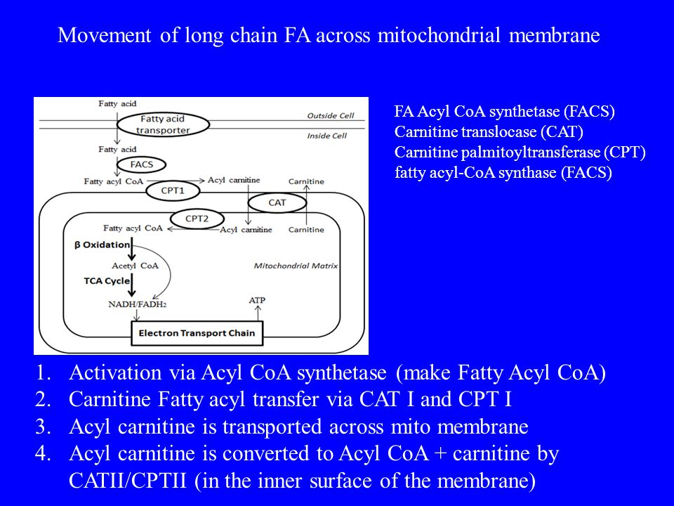 1.Activation via Acyl CoA synthetase (make Fatty Acyl CoA) 2.Carnitine Fatty acyl transfer via CAT I and CPT I 3.Acyl carnitine is transported across mito membrane 4.Acyl carnitine is converted to Acyl CoA + carnitine by CATII/CPTII (in the inner surface of the membrane) Movement of long chain FA across mitochondrial membrane FA Acyl CoA synthetase (FACS) Carnitine translocase (CAT) Carnitine palmitoyltransferase (CPT) fatty acyl-CoA synthase (FACS)