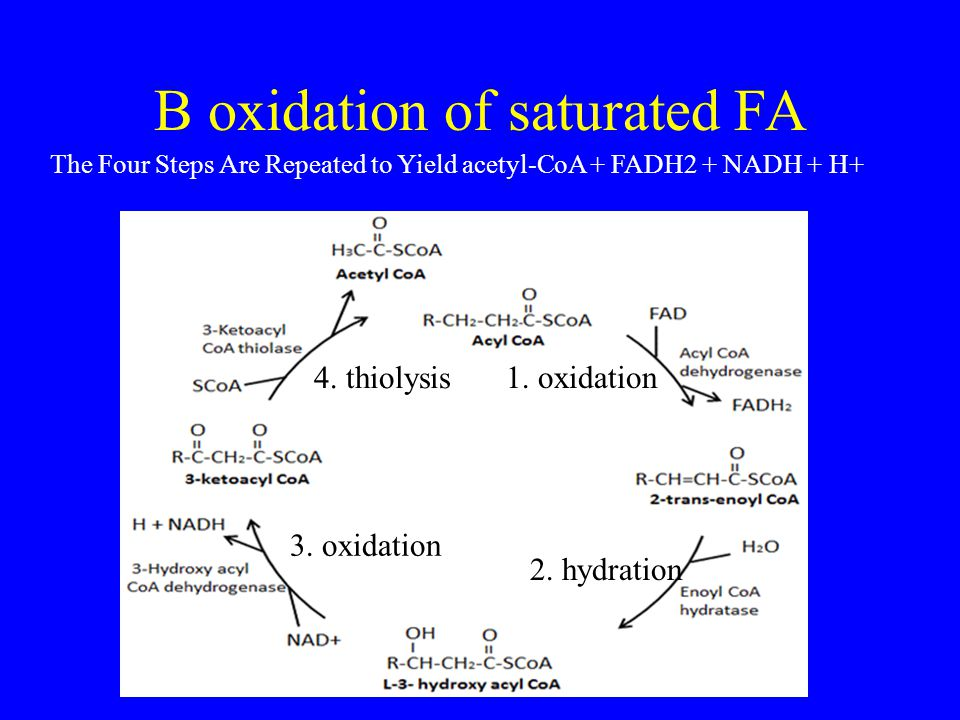 B oxidation of saturated FA 1. oxidation 2. hydration 3. oxidation 4. thiolysis The Four Steps Are Repeated to Yield acetyl-CoA + FADH2 + NADH + H+