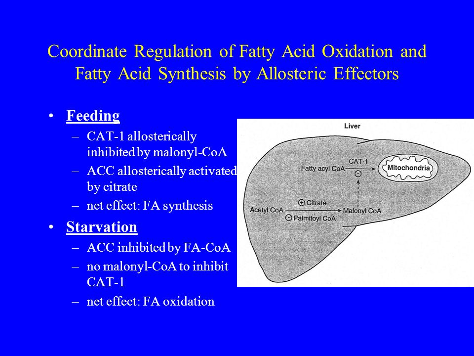 Coordinate Regulation of Fatty Acid Oxidation and Fatty Acid Synthesis by Allosteric Effectors Feeding –CAT-1 allosterically inhibited by malonyl-CoA –ACC allosterically activated by citrate –net effect: FA synthesis Starvation –ACC inhibited by FA-CoA –no malonyl-CoA to inhibit CAT-1 –net effect: FA oxidation