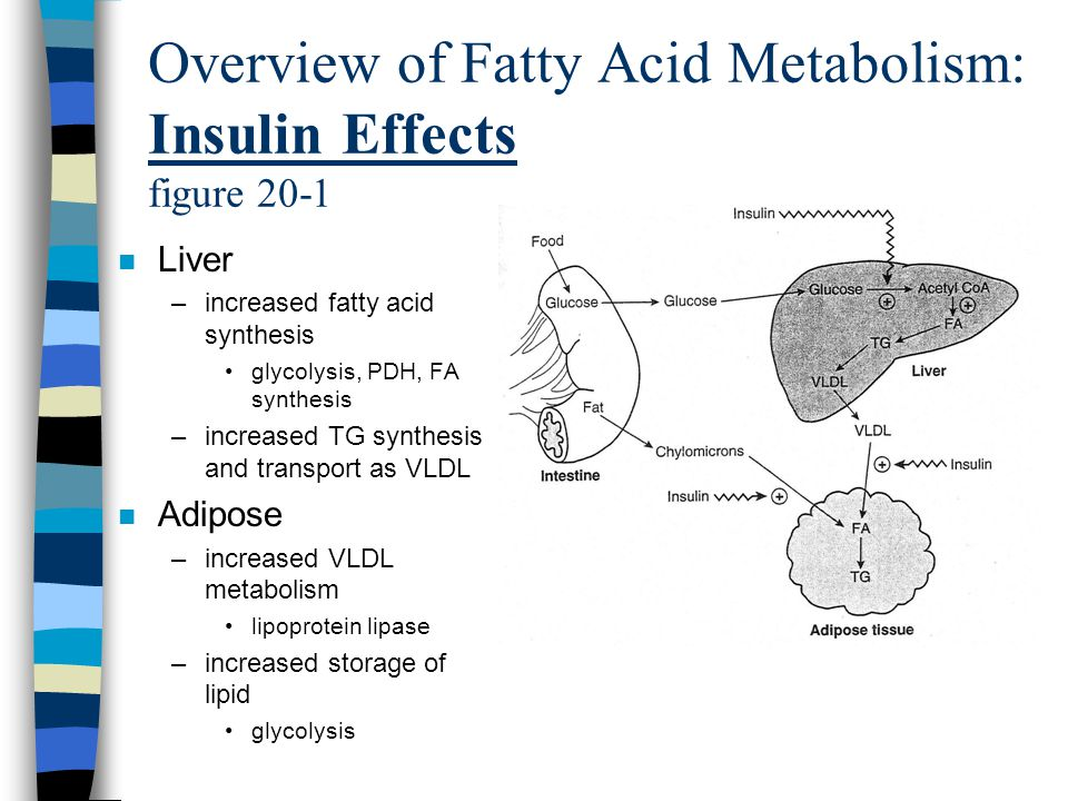 Overview of Fatty Acid Metabolism: Insulin Effects figure 20-1 n Liver –increased fatty acid synthesis glycolysis, PDH, FA synthesis –increased TG synthesis and transport as VLDL n Adipose –increased VLDL metabolism lipoprotein lipase –increased storage of lipid glycolysis
