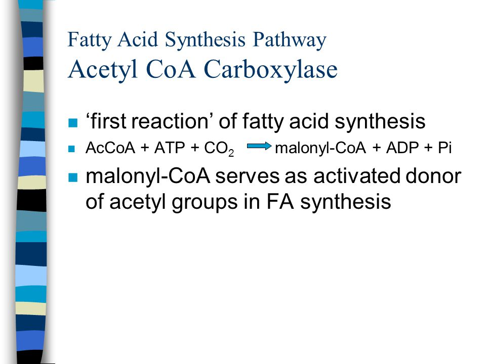 Fatty Acid Synthesis Pathway Acetyl CoA Carboxylase n 'first reaction' of fatty acid synthesis n AcCoA + ATP + CO 2 malonyl-CoA + ADP + Pi n malonyl-CoA serves as activated donor of acetyl groups in FA synthesis