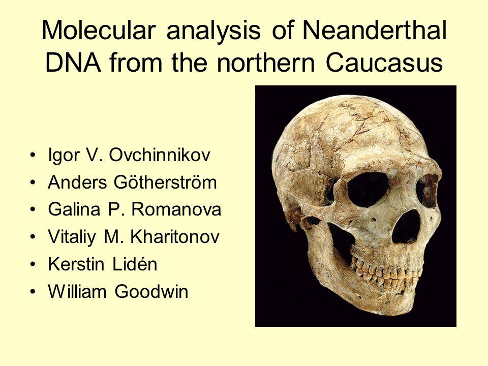 Molecular analysis of Neanderthal DNA from the northern Caucasus Igor V. Ovchinnikov Anders Götherström Galina P. Romanova Vitaliy M. Kharitonov Kerst