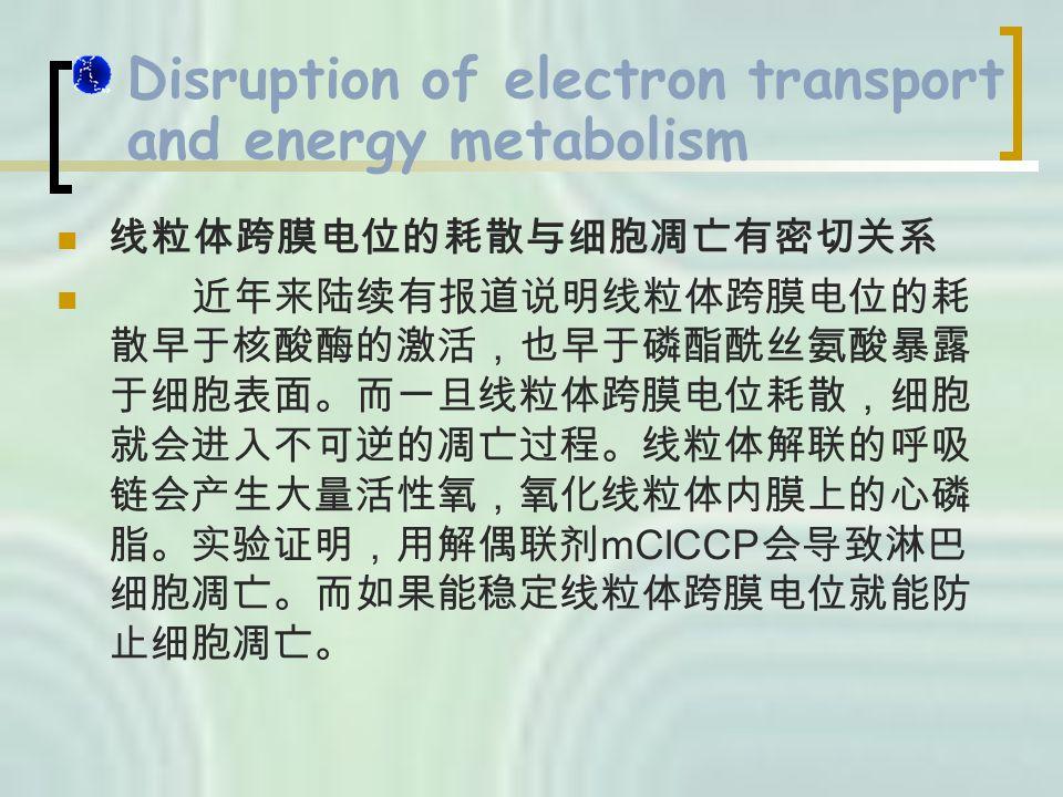 Disruption of electron transport and energy metabolism 线粒体跨膜电位的耗散与细胞凋亡有密切关系 近年来陆续有报道说明线粒体跨膜电位的耗 散早于核酸酶的激活,也早于磷酯酰丝氨酸暴露 于细胞表面。而一旦线粒体跨膜电位耗散,细胞 就会进入不可逆的凋亡过程。线粒体解联的呼吸 链会产生大量活性氧,氧化线粒体内膜上的心磷 脂。实验证明,用解偶联剂 mClCCP 会导致淋巴 细胞凋亡。而如果能稳定线粒体跨膜电位就能防 止细胞凋亡。