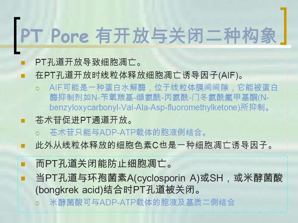 PT Pore 有开放与关闭二种构象 PT 孔道开放导致细胞凋亡。 在 PT 孔道开放时线粒体释放细胞凋亡诱导因子 (AIF) 。  AIF 可能是一种蛋白水解酶,位于线粒体膜间间隙,它能被蛋白 酶抑制剂如 N- 苄氧羰基 - 缬氨酰 - 丙氨酰 - 门冬氨酰氟甲基酮 (N- benzyloxycarbonyl-Val-Ala-Asp-fluoromethylketone) 所抑制。 苍术苷促进 PT 通道开放。  苍术苷只能与 ADP-ATP 载体的胞液侧结合。 此外从线粒体释放的细胞色素 C 也是一种细胞凋亡诱导因子。 而 PT 孔道关闭能防止细胞凋亡。 当 PT 孔道与环孢菌素 A(cyclosporin A) 或 SH ,或米酵菌酸 (bongkrek acid) 结合时 PT 孔道被关闭。  米酵菌酸可与 ADP-ATP 载体的胞液及基质二侧结合