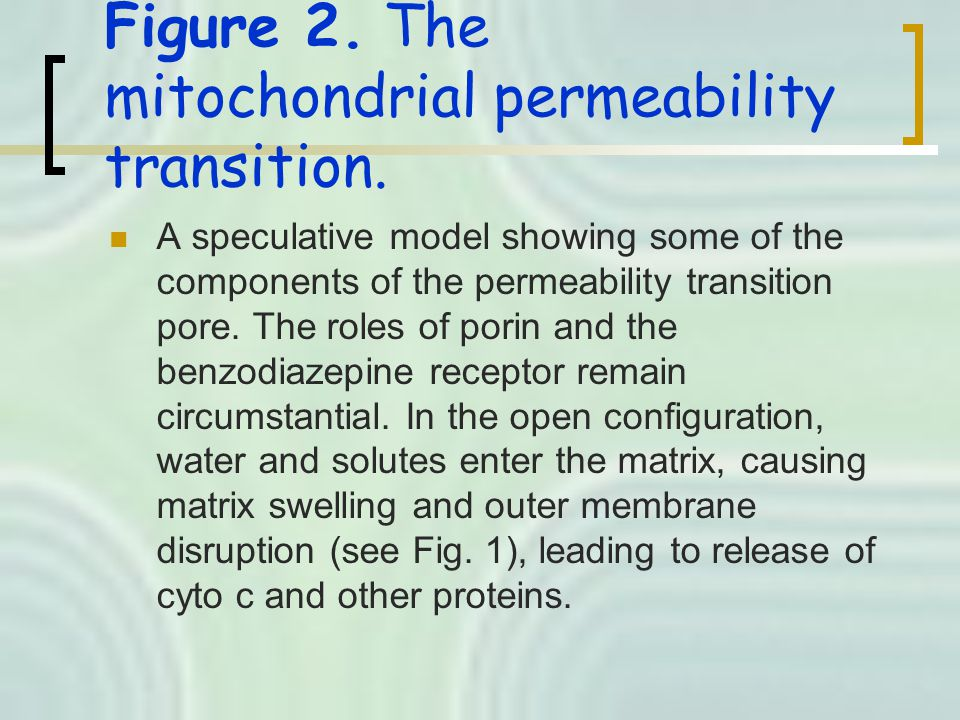 Figure 2. The mitochondrial permeability transition.
