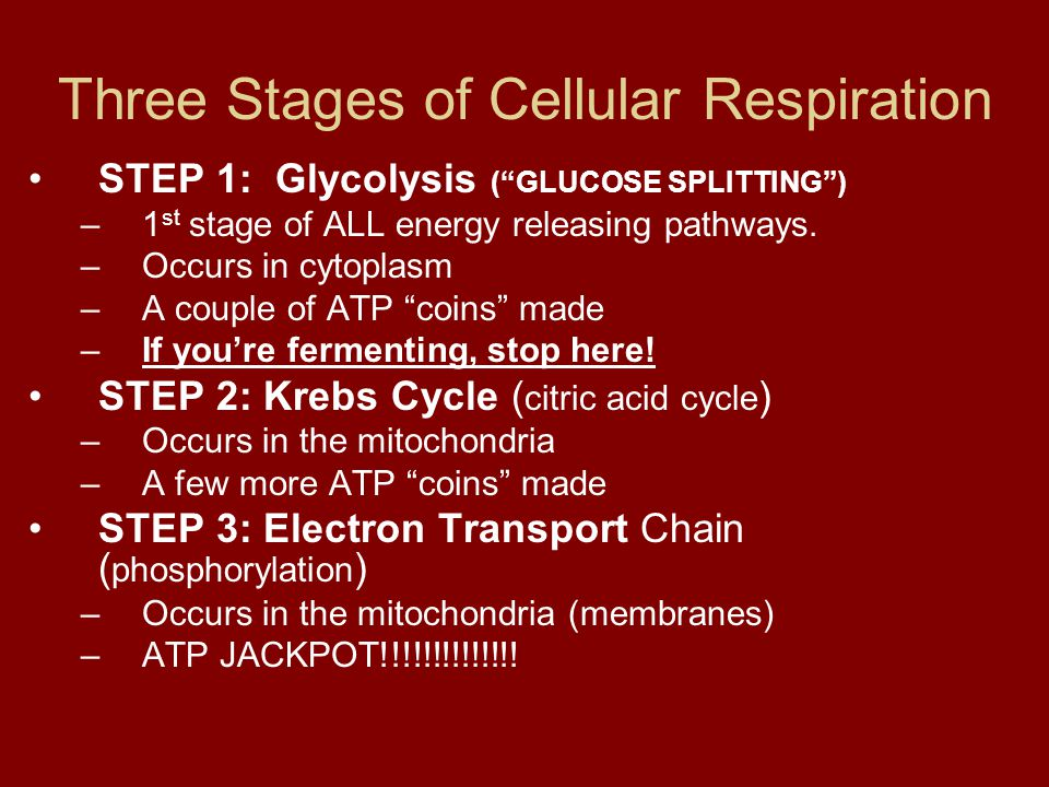 """Three Stages of Cellular Respiration STEP 1: Glycolysis (""""GLUCOSE SPLITTING"""") –1 st stage of ALL energy releasing pathways. –Occurs in cytoplasm –A co"""