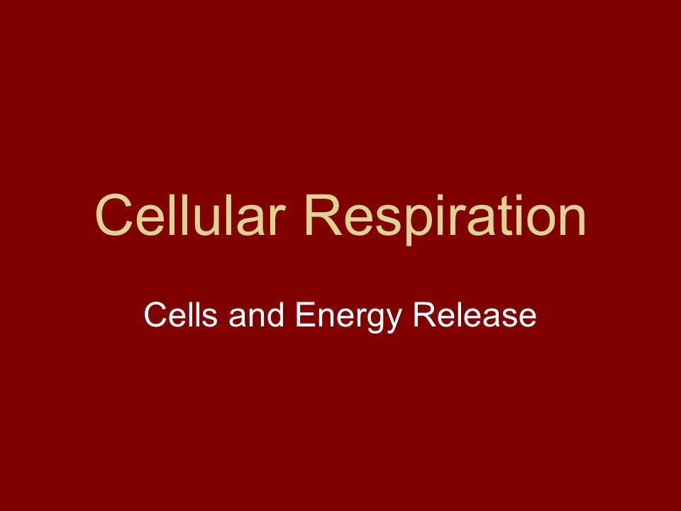 Cellular Respiration Cells and Energy Release