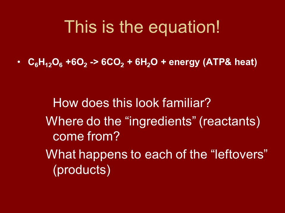 """This is the equation! C 6 H 12 O 6 +6O 2 -> 6CO 2 + 6H 2 O + energy (ATP& heat) How does this look familiar? Where do the """"ingredients"""" (reactants) co"""
