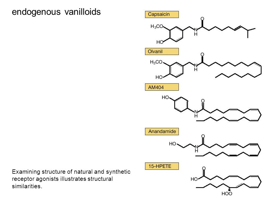 endogenous vanilloids Examining structure of natural and synthetic receptor agonists illustrates structural similarities.