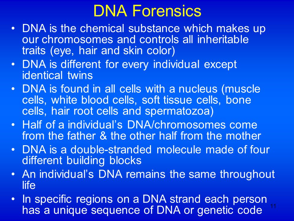DNA Forensics DNA is the chemical substance which makes up our chromosomes and controls all inheritable traits (eye, hair and skin color) DNA is different for every individual except identical twins DNA is found in all cells with a nucleus (muscle cells, white blood cells, soft tissue cells, bone cells, hair root cells and spermatozoa) Half of a individual's DNA/chromosomes come from the father & the other half from the mother DNA is a double-stranded molecule made of four different building blocks An individual's DNA remains the same throughout life In specific regions on a DNA strand each person has a unique sequence of DNA or genetic code 11