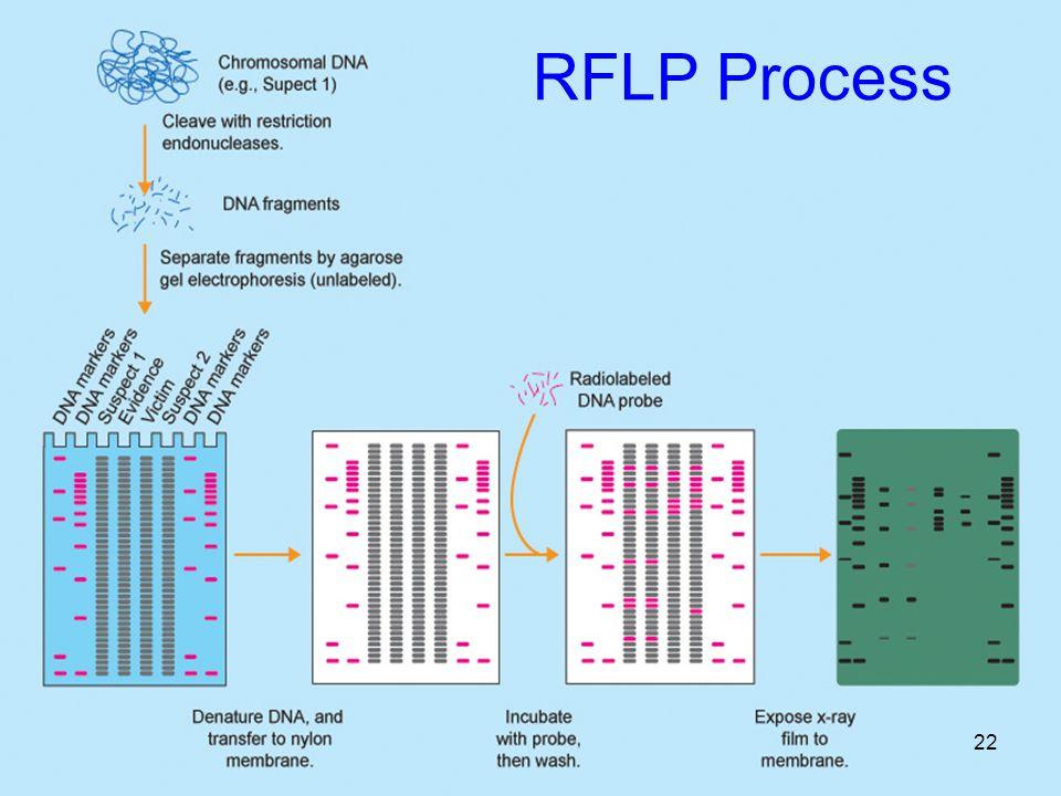 RFLP Process 22