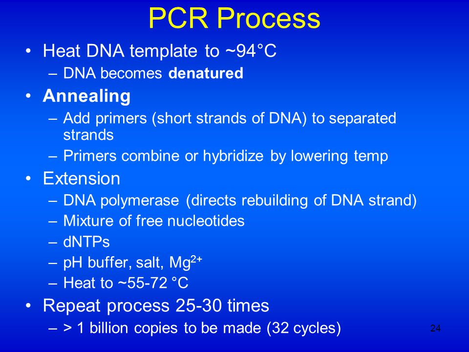 PCR Process Heat DNA template to ~94°C –DNA becomes denatured Annealing –Add primers (short strands of DNA) to separated strands –Primers combine or h