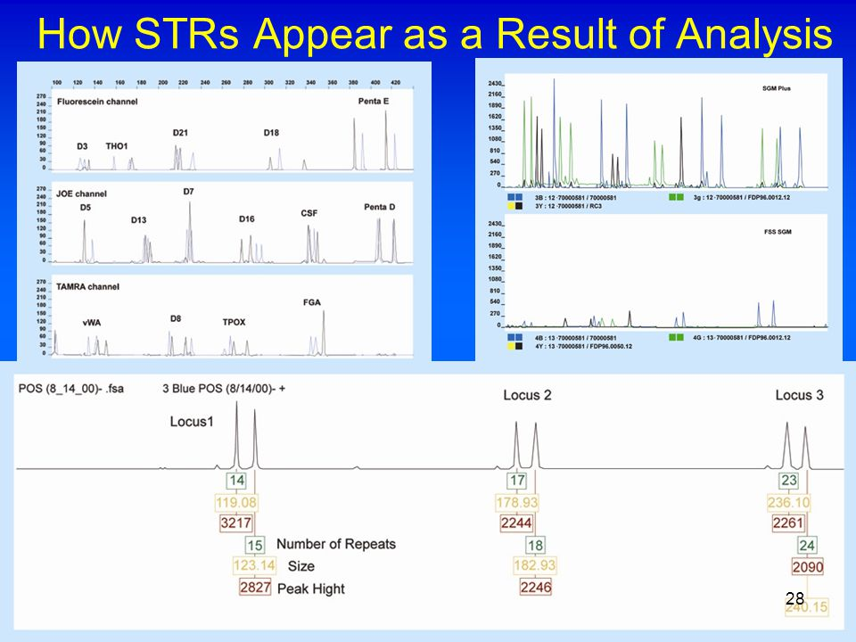 How STRs Appear as a Result of Analysis 28