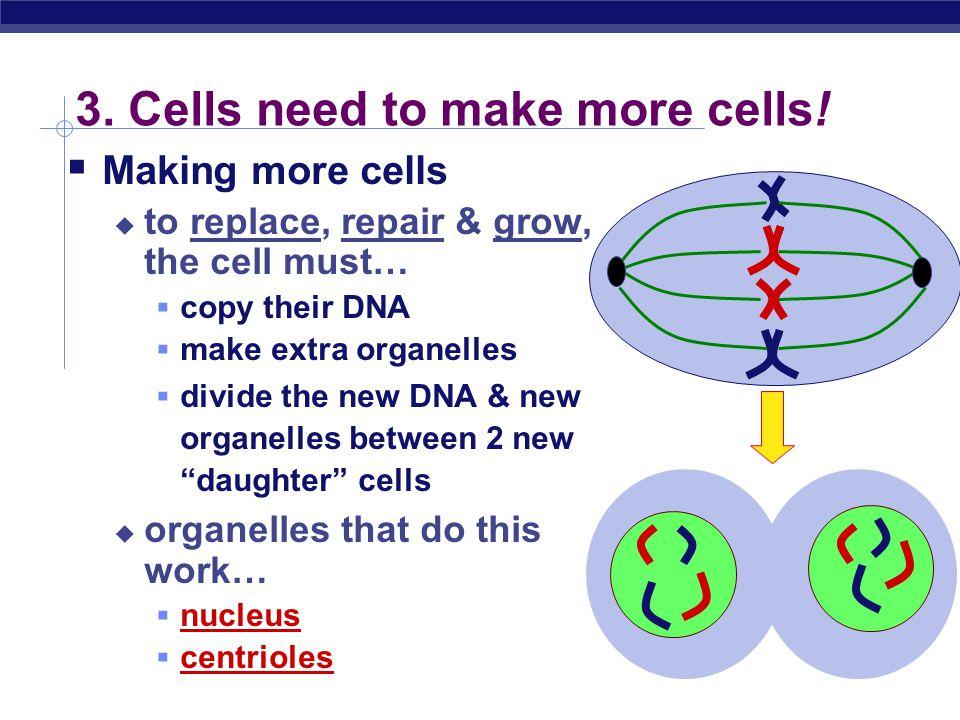 Regents Biology central vacuole  storage: food, water or waste mitochondria  make ATP in cellular respiration chloroplast  make ATP & sugars in pho