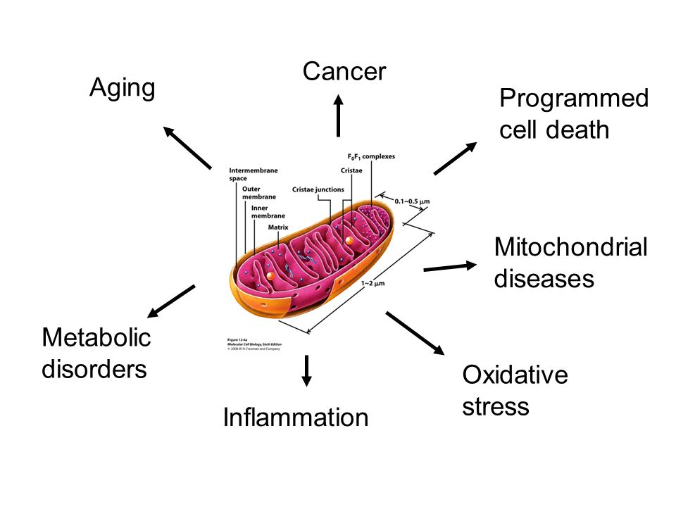 Programmed cell death Mitochondrial diseases Cancer Aging Metabolic disorders Oxidative stress Inflammation