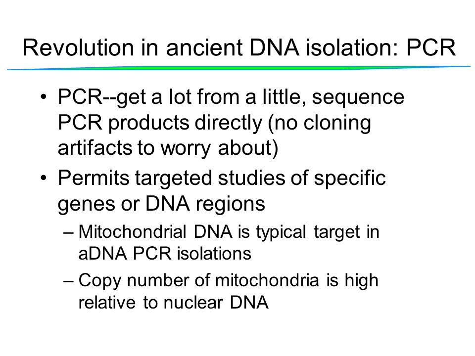 Revolution in ancient DNA isolation: PCR PCR--get a lot from a little, sequence PCR products directly (no cloning artifacts to worry about) Permits ta