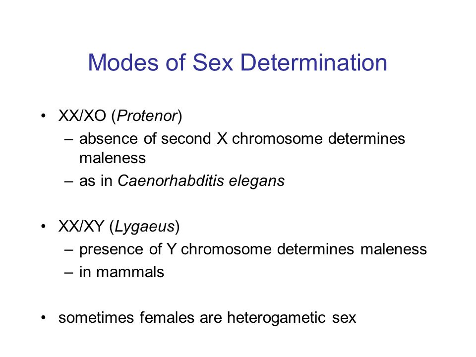 Modes of Sex Determination XX/XO (Protenor) –absence of second X chromosome determines maleness –as in Caenorhabditis elegans XX/XY (Lygaeus) –presence of Y chromosome determines maleness –in mammals sometimes females are heterogametic sex