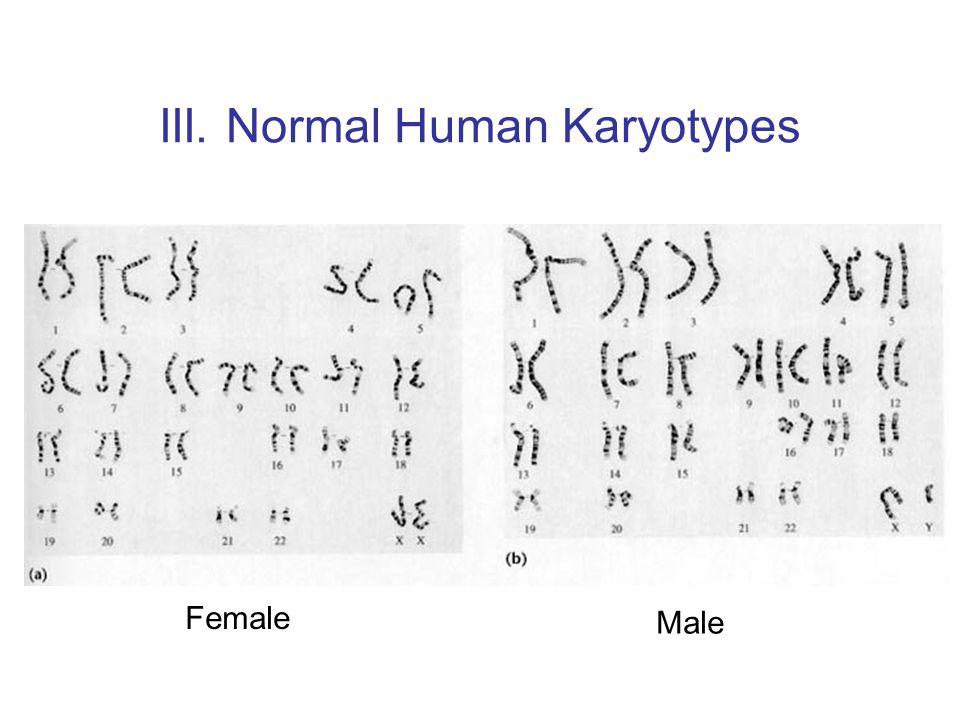 III. Normal Human Karyotypes Female Male