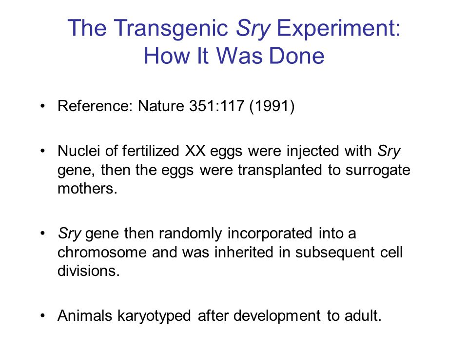 The Transgenic Sry Experiment: How It Was Done Reference: Nature 351:117 (1991) Nuclei of fertilized XX eggs were injected with Sry gene, then the egg