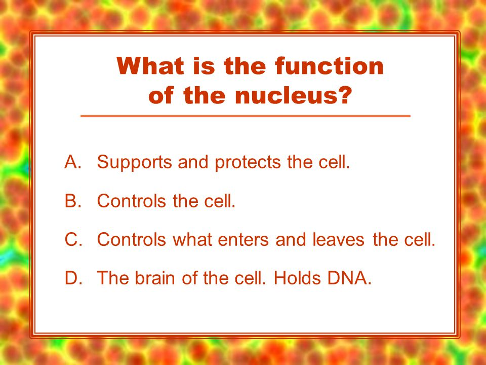 A.Supports and protects the cell. B.Controls the cell.