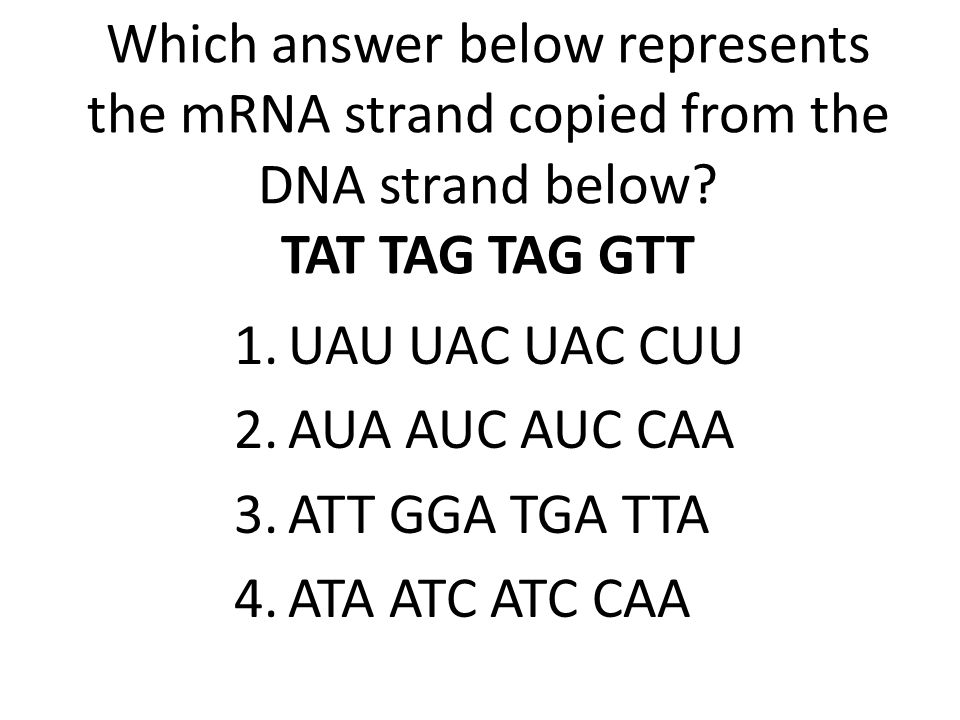 Which answer below represents the mRNA strand copied from the DNA strand below? TAT TAG TAG GTT 1.UAU UAC UAC CUU 2.AUA AUC AUC CAA 3.ATT GGA TGA TTA